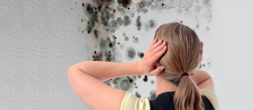 Fast lav pris på håndtering af skimmelsvamp online